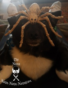 panda and the spider